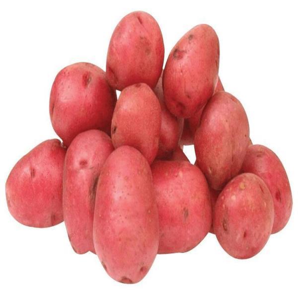 Photo Pomme de terre Rouge Frelicot legumes