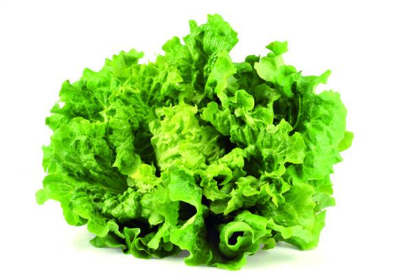 Photo Salade batavia null