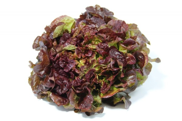 Photo Salade Feuille Chene Rouge Frelicot legumes