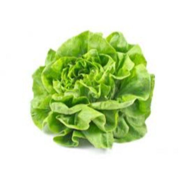 Photo Salade laitue null