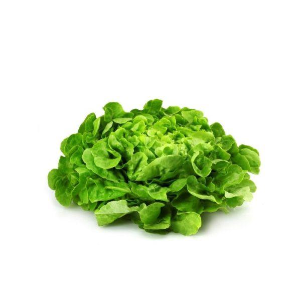 Photo Salade chene blonde null