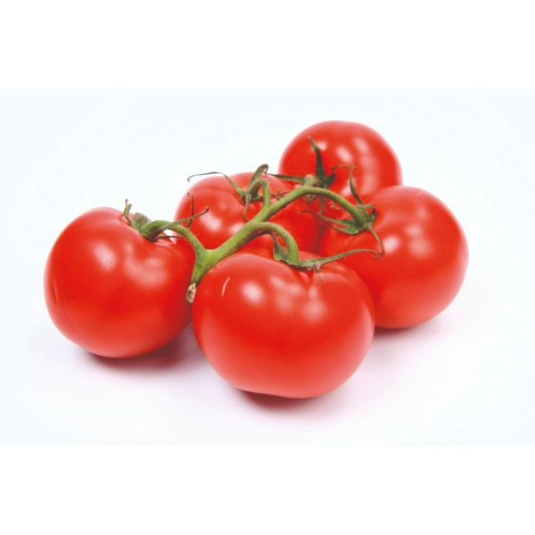 Photo Tomate grappe null